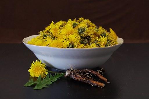 dandelion-root